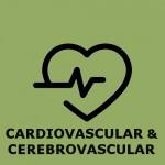 Cardiovascular OK